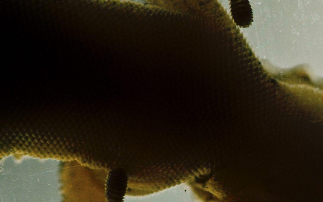 Åpen lesesirkel – Salamanderkrigen